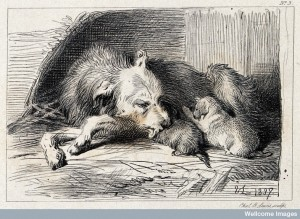 A bitch is licking its suckling puppies. Etching by C. G. Lewis. 1848, after E.H. Landseer. Credit: Wellcome Library, London.