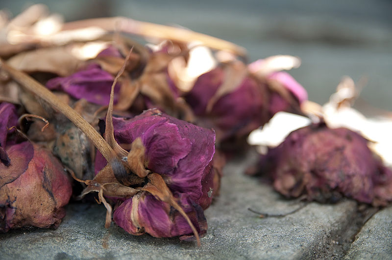 Menotoxin – when menstruation can kill?