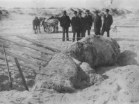 The St. Augustine Monster in 1897, weeks after its discovery.
