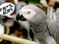 Parrots with Shocking Vocabularies