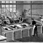 Unhairing in the 1800s: Animal Processing and Personal Care