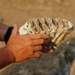 Slaves Identify Elephant Fossils in America
