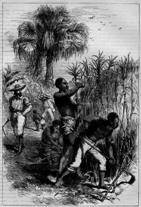 Slaves harvesting sugar cane
