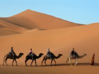 How Desert Caravans Crossed the Sahara